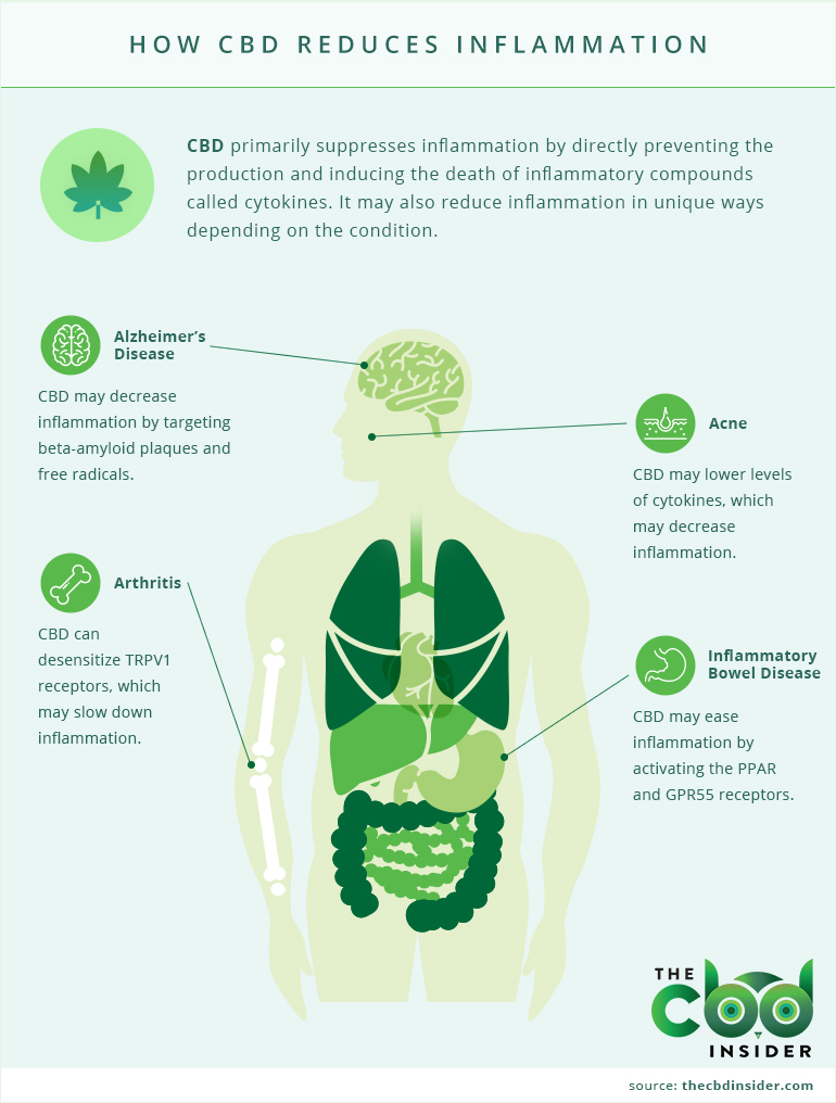 cbd inflammation infographic