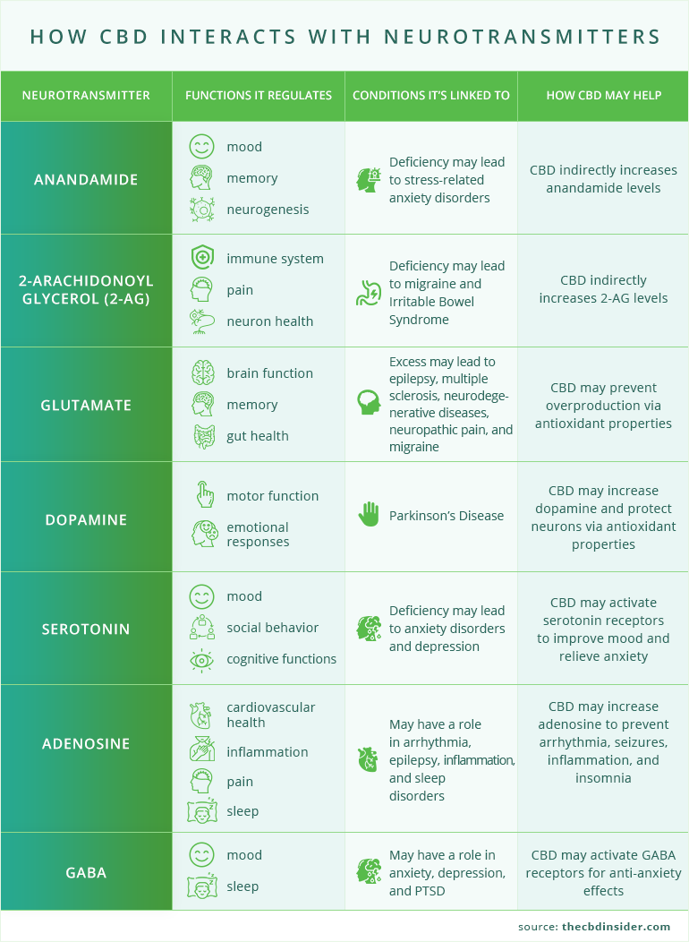 cbd and neurotransmitters infographic