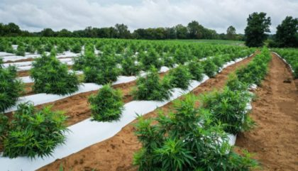 usda gives hope to hemp supporters