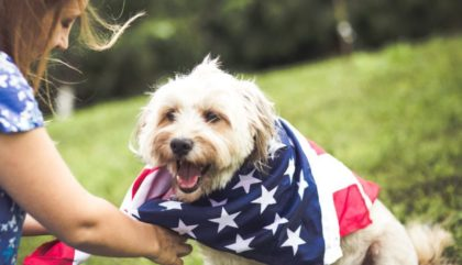 cbd pet products on fourth of july