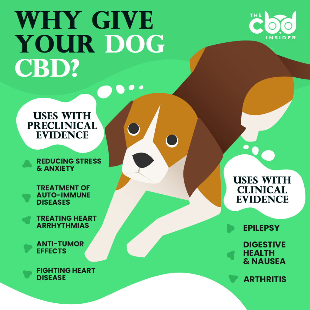 why give your dog cbd